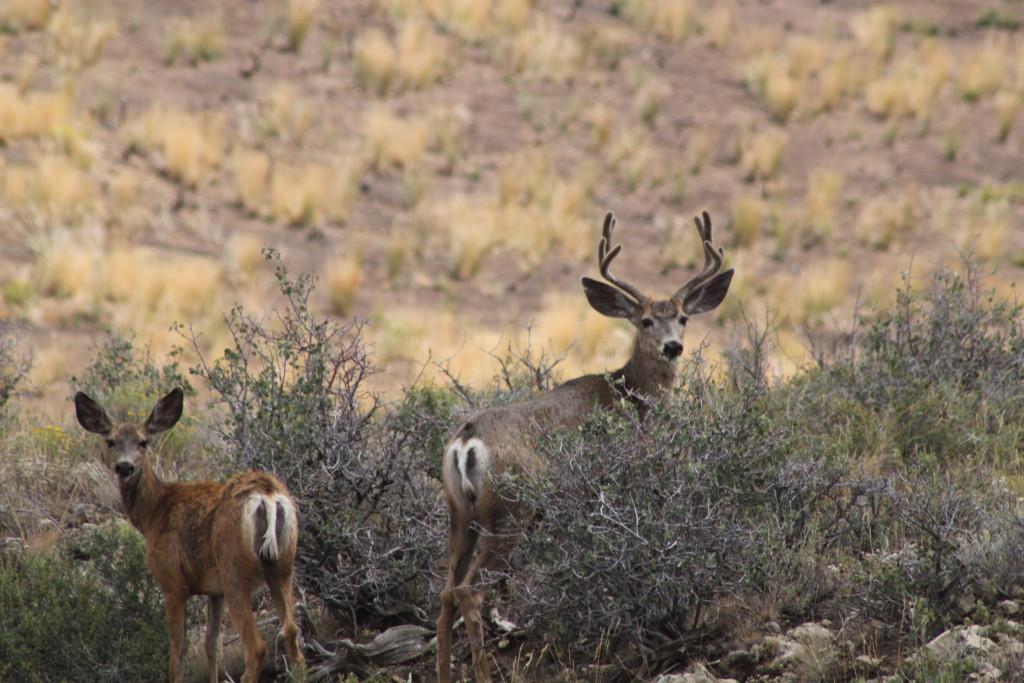 Deer Nevada Outdooirsmen in Wheelchairs 2014 028